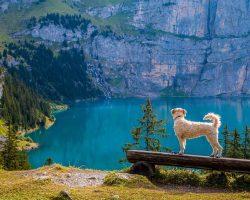 Hund auf Bank am See
