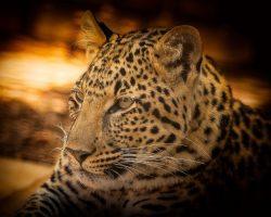 chamaeleon-reisen suedafrika krueger park