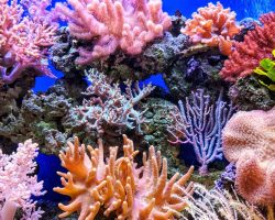 getyourguide marsa alam korallen