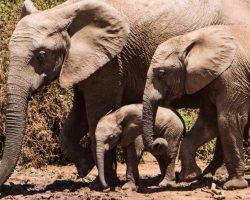 getyourguide port elizabeth addo elefant