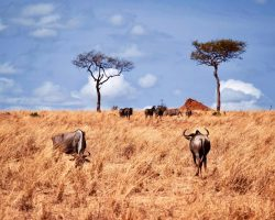 tansania unsterbliche serengeti banner